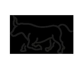 picto taureau